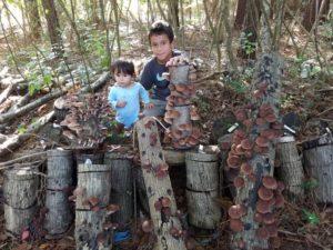 Mushroom Farm at Home